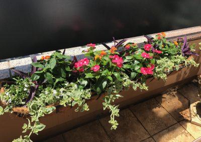 Patio Garden 5